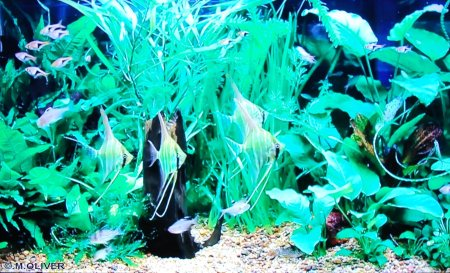 (A fish tank on TV)